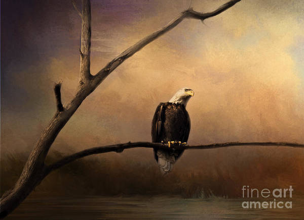 Photograph - Bald Eagle On A Branch by Pam  Holdsworth