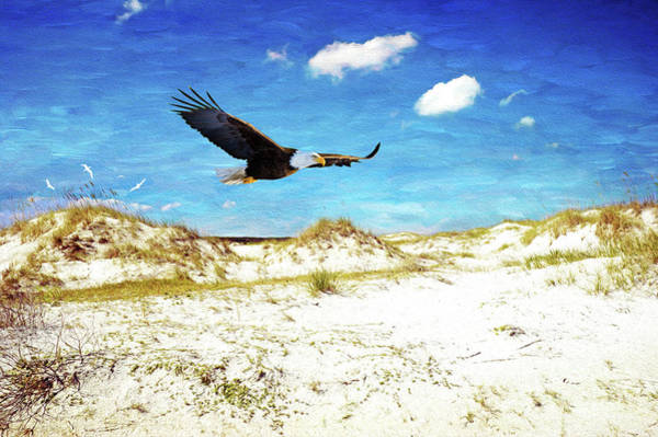 Flying Eagle Photograph - Bald Eagle On Cumberland Island by Laura D Young