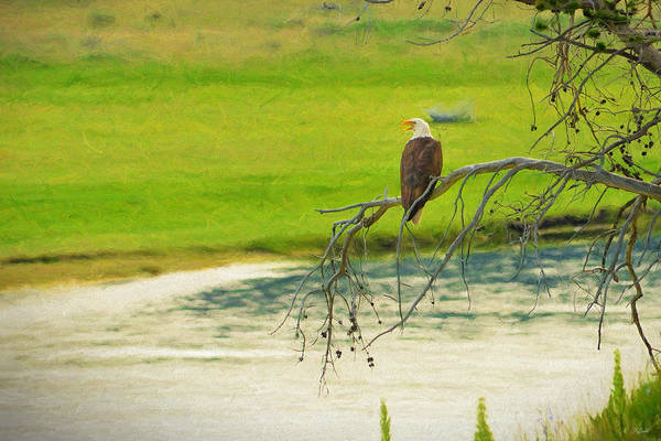 Photograph - Bald Eagle Over The Yellowstone River by Greg Norrell