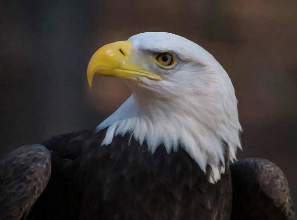 Digital Art - Bald Eagle Painting by Chris Flees