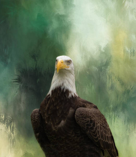 Photograph - Bald Eagle Profile by Kim Hojnacki