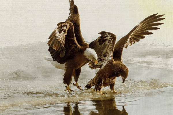 Photograph - Bald Eagle Series #9 Ending The Attack by Patti Deters