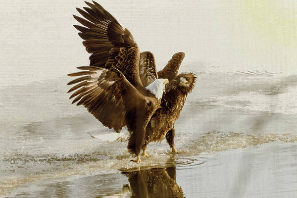 Photograph - Bald Eagle Series #12 I Just Wanted The Fish by Patti Deters