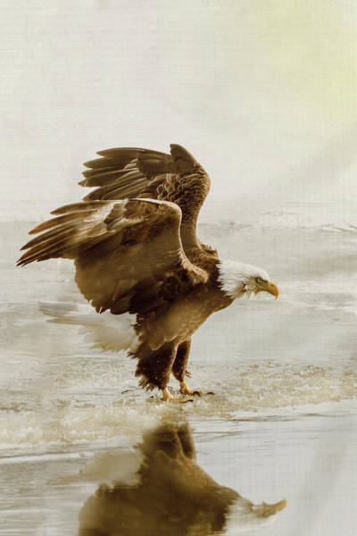 Photograph - Bald Eagle Series #2 Eagle Has Landed by Patti Deters