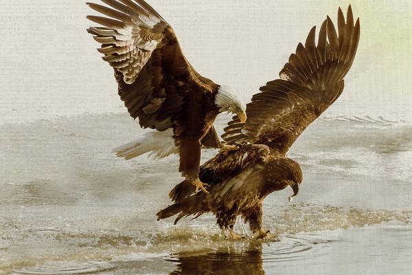 Photograph - Bald Eagle Series #7 Claws On Feathers by Patti Deters