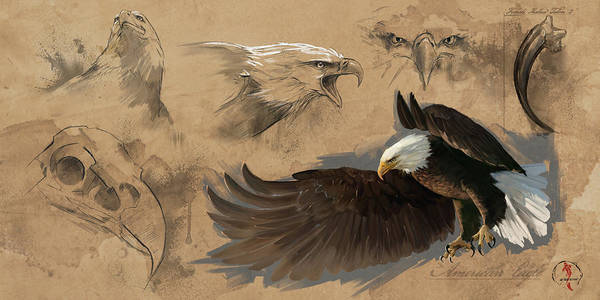 Wall Art - Digital Art - Bald Eagle Study Sheet by Steve Goad