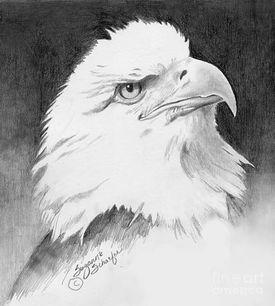 Bald Eagles Drawing - Bald Eagle  by Suzanne Schaefer