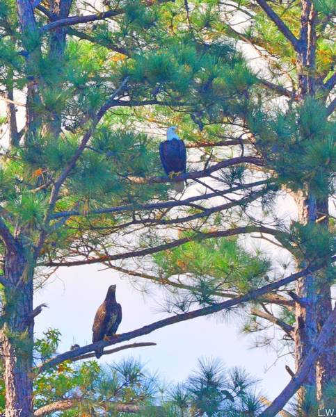 Photograph - Bald Eagle With Juvenile Eagle by Lisa Wooten