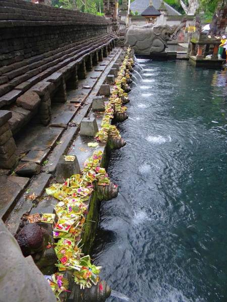 Photograph - Bali Temple Offerings by Exploramum Exploramum