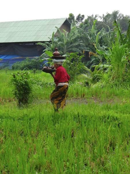 Photograph - Balinese Lady Carrying Pot by Exploramum Exploramum