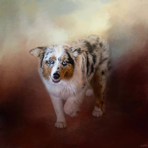 Wall Art - Photograph - Ball Of Energy - Australian Shepherd by Jai Johnson
