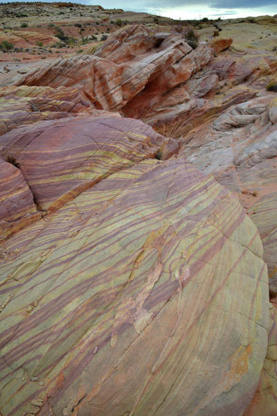Photograph - Ball Of Swirls In Valley Of Fire by Ray Mathis