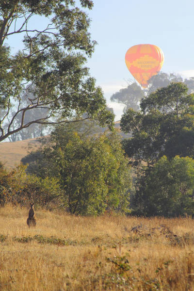 Photograph - Balloon And Kangaroo Yarra Glen 29-03-2015 by Bert Ernie