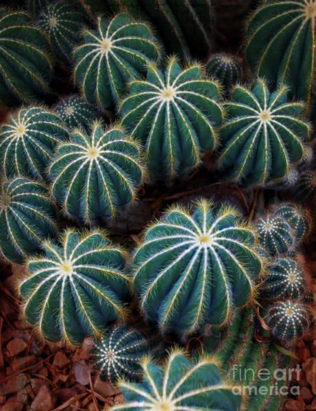Wall Art - Photograph - Balloon Cactus - Milwaukee Domes by Mary Machare