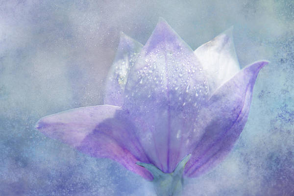 Wall Art - Digital Art - Balloon Flower Sparkle by Terry Davis