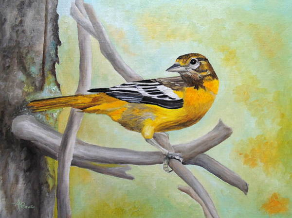 Painting - Baltimore Oriole by Angeles M Pomata