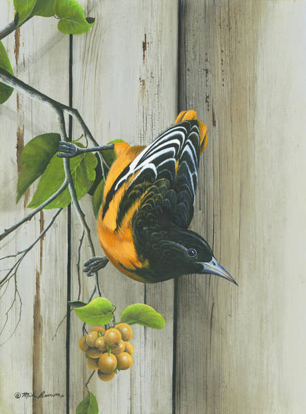 Painting - Baltimore Oriole by Mike Brown