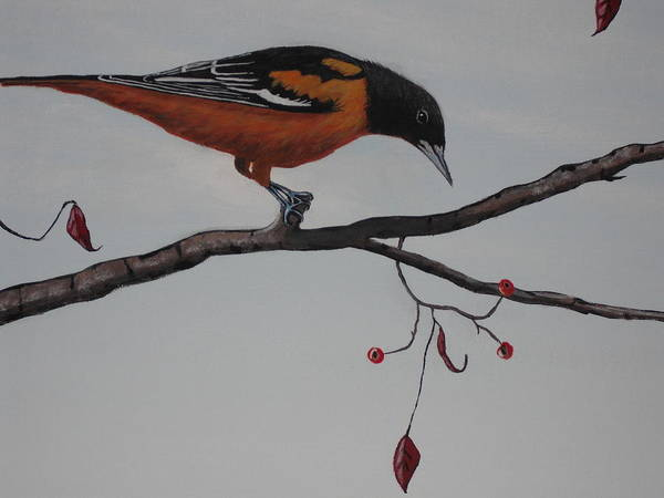 Wall Art - Painting - Baltimore Oriole Too by Candace Shockley