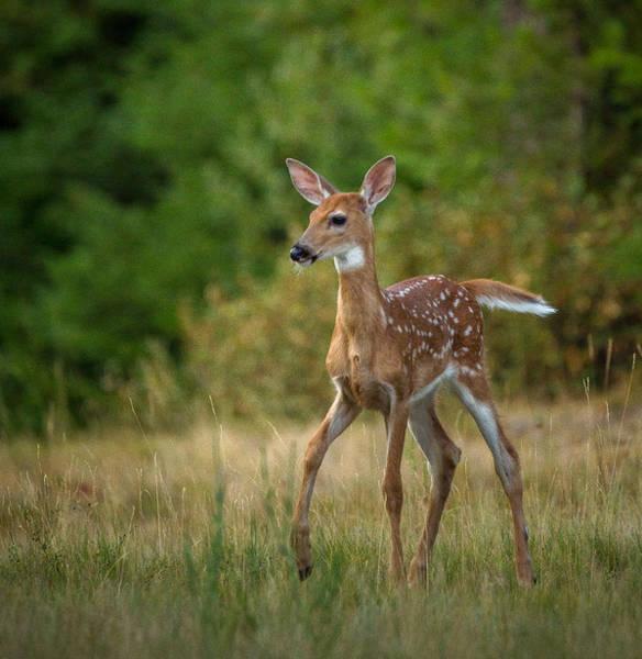 Photograph - Bambi // Whitefish, Montana  by Nicholas Parker