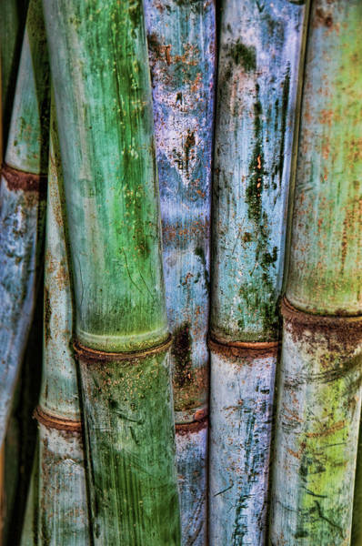 Photograph - Bamboo 2 by Michael Raiman