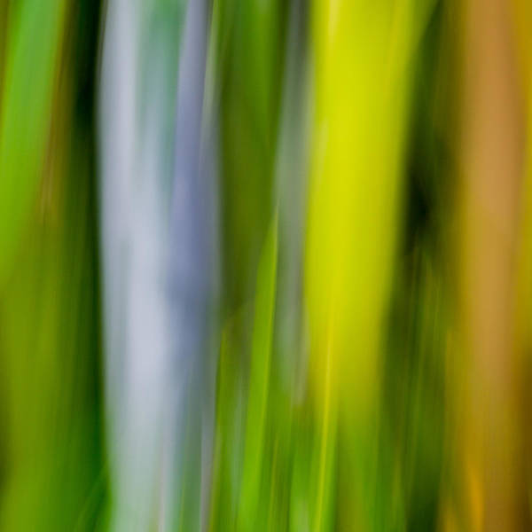 Photograph - Bamboo Abstract by James Woody