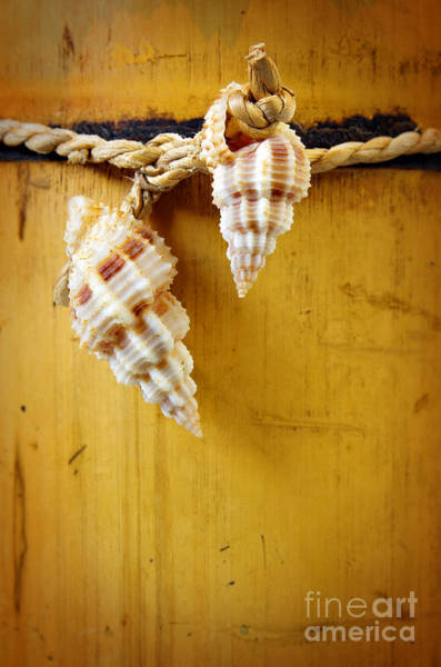 Conch Photograph - Bamboo And Conches by Carlos Caetano