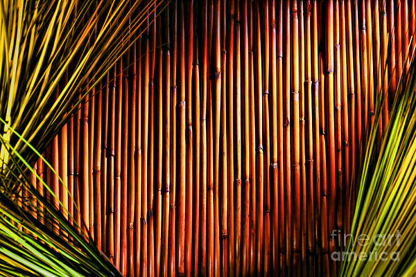 Wall Art - Photograph - Bamboo And Grass by Olivier Le Queinec