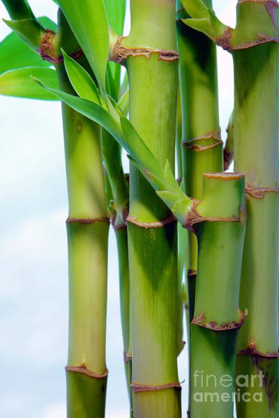 Wall Art - Photograph - Bamboo And Sky by Olivier Le Queinec