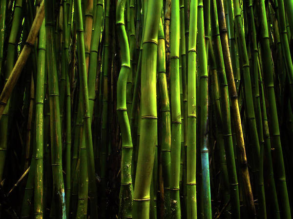 Photograph - Bamboo by Christopher Johnson