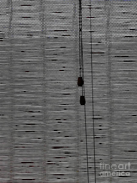 Photograph - Bamboo Curtain by Fei A