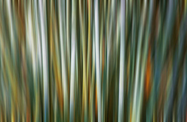 Photograph - Bamboo Digital Abstracts Motion Blur  by Rich Franco