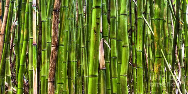 Bamboo Photograph - Bamboo by Dustin K Ryan