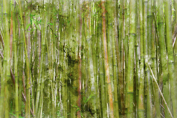 Bamboo Shoots Photograph - Bamboo Forest Background by Brandon Bourdages