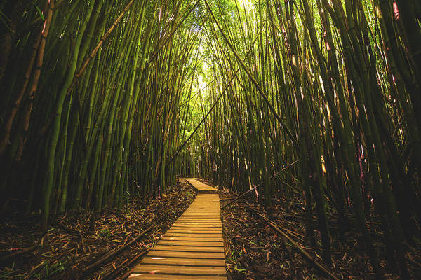 Bamboo Photograph - Bamboo Forest by Cole Pattschull