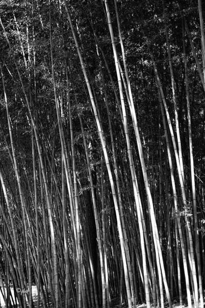 Photograph - Bamboo Garden by Paulette B Wright