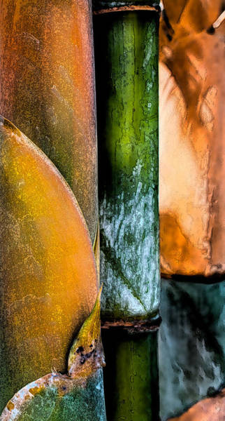 Wall Art - Photograph - Bamboo by Greg Waters