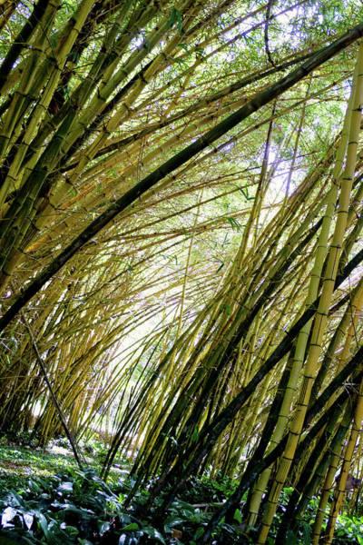 Allerton Garden Photograph - Bamboo Grove by Candace Freeland