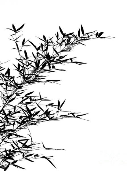 Bamboo Shoots Photograph - Bamboo Leaves And Branches by Yali Shi