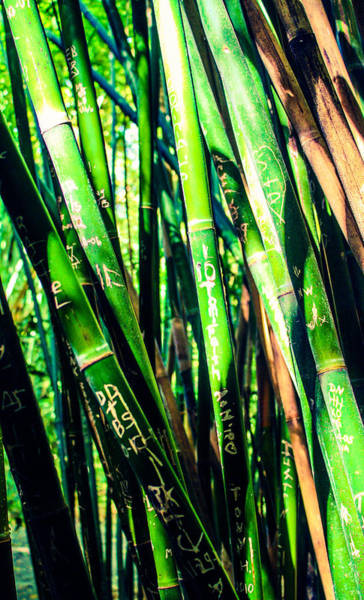 Photograph - Bamboo Love by Stacey Rosebrock
