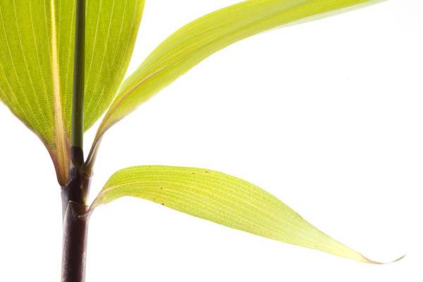 Minimalist Photograph - Bamboo Meditation 2 by Carol Leigh