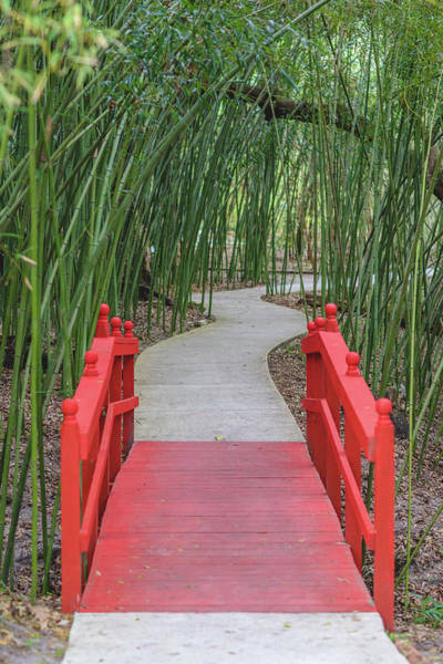 Bamboo Path Through A Red Bridge Art Print