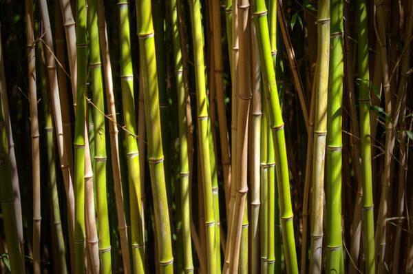 Bamboo Shoots Photograph - Bamboo by Ricky Barnard