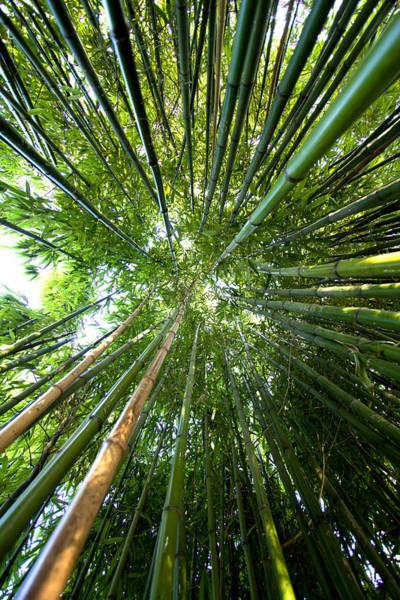 Vertical Garden Photograph - Bamboo by Stevejack Photos