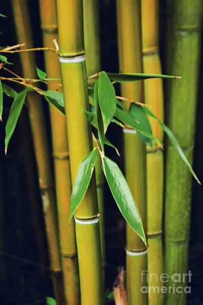 Wall Art - Photograph - Bamboo by Wedigo Ferchland