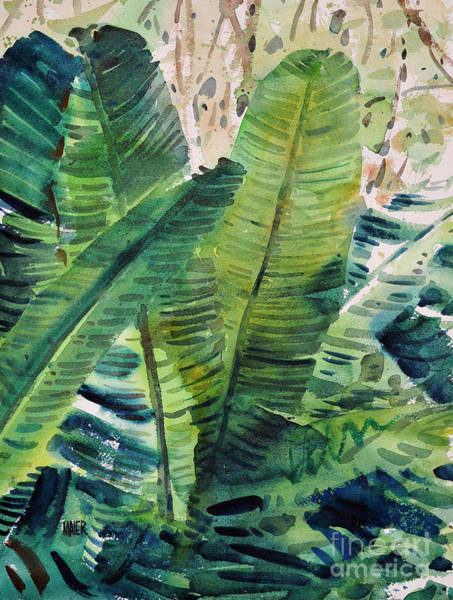Conservatory Wall Art - Painting - Banana Leaves by Donald Maier