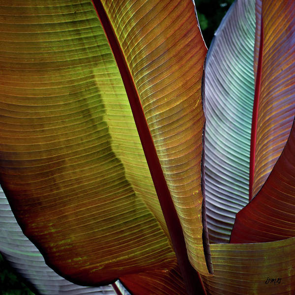 Photograph - Banana Plant Leaves I Color by David Gordon
