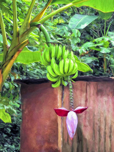 Painting - Bananas At Hana Maui by Dominic Piperata
