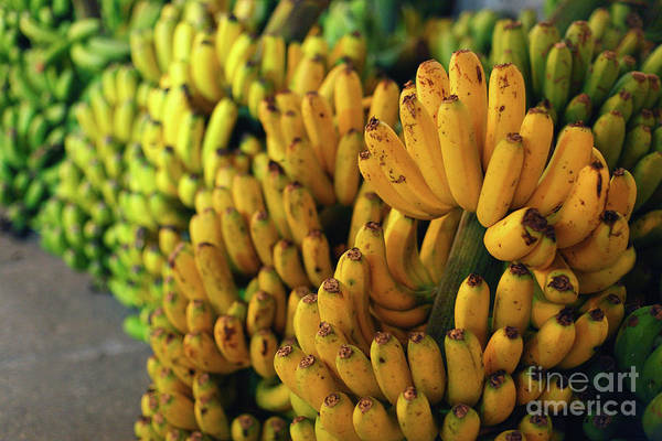 Wall Art - Photograph - Bananas At Night by Gaspar Avila