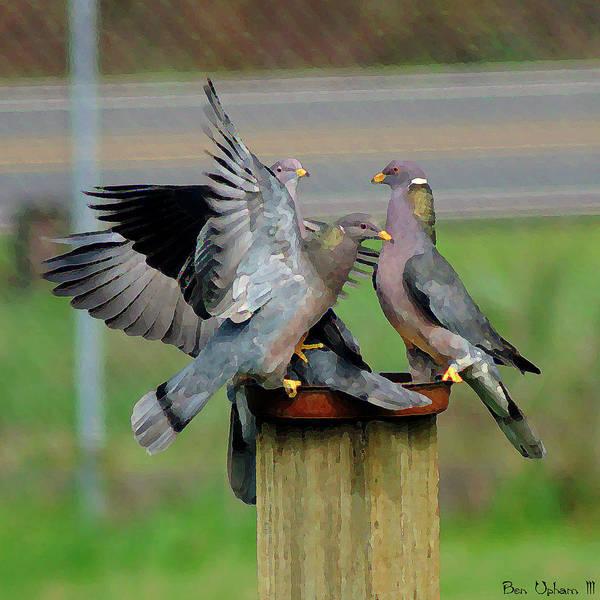 Band-tailed Pigeons #1 Art Print