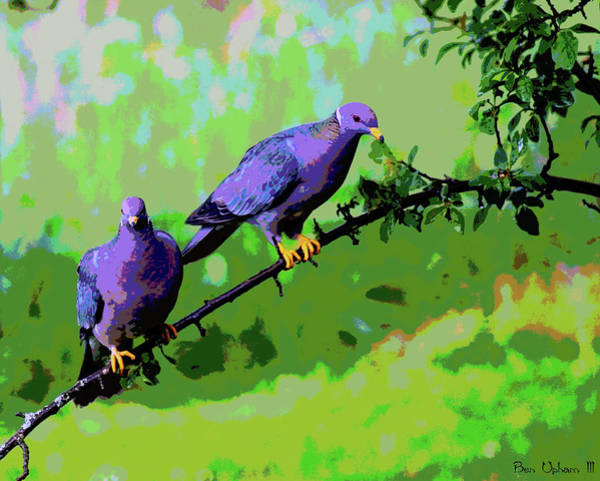 Photograph - Band-tailed Pigeons Art #1 by Ben Upham III